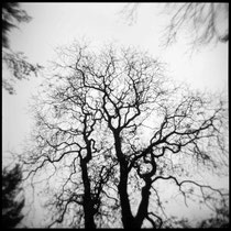 When light fades to grey. | Holga CFN 120