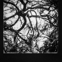 Blurred ROOTS. | Polaroid Week October 24th - Day Five 1 | Polaroid SX-70 Land Camera Alpha 1 - SLR670-X MING EDITION
