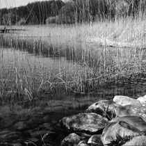 Such wonderful things surround you. | Hasselblad XPan with Ilford Fp4+ | 2020-12-28