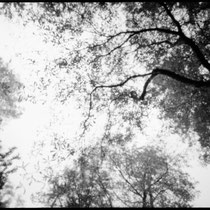 Look up into the sky. | Holga WPC Pinhole | Kodak TMax 100 Pro - expired 12/2000