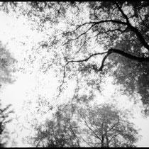 Look up into the sky. | Holga WPC Pinhole | Kodak TMax 100 Pro - expired 12/2000