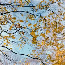 There`s a silence surrounding me. | Kodak Gold 200 taken with Canon 50E