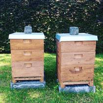 Bienen am Innocenciapark