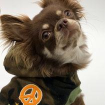 Hundebekleidung Army Hoodie