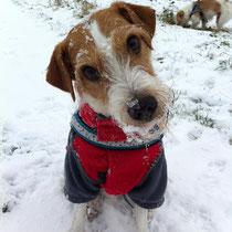 ich liebe Schnee und kann wieder toben und wenn das Implantat zu kühl wird, gibts von Frauchen eine kleine Massage ;-)