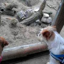 Mein 1. großer Ausflug am 05.01.13 im Zoo Landau