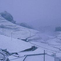 和束の雪景色