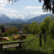Blick über Hagen zur Alpspitze und Zugspitze