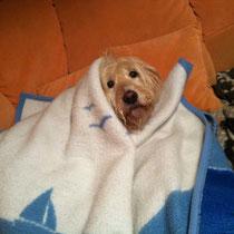Der Kuschelhund