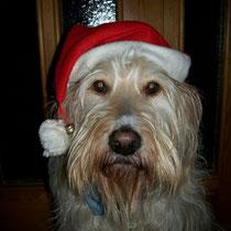 Mein Weihnachtshund