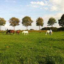 Begegnungen mit der Herde