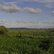 印旛沼の夏