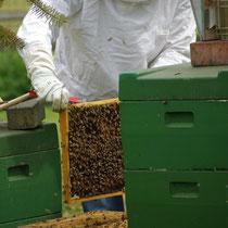 Unsere Bienen sind fleißig.