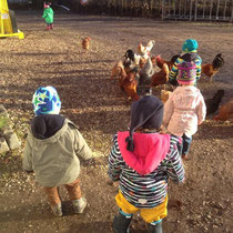 Hühnerfütterung.
