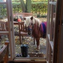 Pegasus wartet auf die kleinen Reiter.