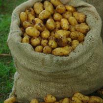 In unserem Hofladen erhalten Sie täglich Kartoffeln von der letzten Ernte.