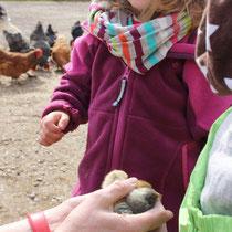 Menschenkinder treffen Hühnerküken.