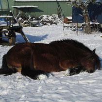 Elfi hat sich in den Schnee gelegt ...