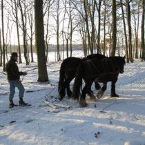 Rückearbeiten im Winter
