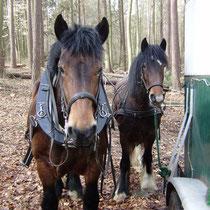 Elfi und Rubinia am Pferdeanhänger