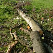 Baum zum Rücken bereit gelegt