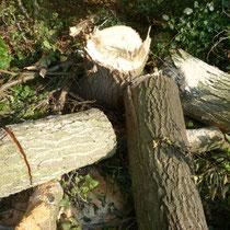 Holzreste im Wald