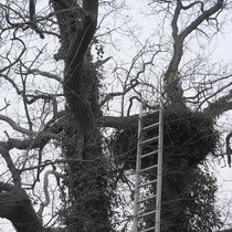 Reinigung Nest 26 in der Eiche 28.02.2010