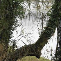Störche im Bramautal 28.02.2010