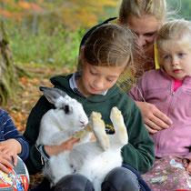 Marotte, la lapine raffole se faire câliner par les petits hôtes du Masbareau,Royères à proximité de Limoges et de St Léonard-de-Noblat,Haute-Vienne, Limousin, Nouvelle-Aquitaine