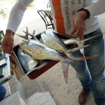 Morgen gibt's frischen Fisch