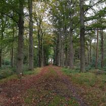 Het pad naar de theekoepel. Foto gemaakt door: Marian van Westenbrugge