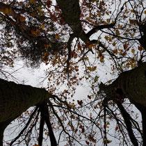 Foto gemaakt door: Marian van Westenbrugge
