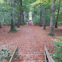 Op weg terug na een prachtige wandeling. Foto gemaakt door: Marian van Westenbrugge