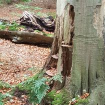 Er zit misschien meer leven in deze boom dan je denken zou.... Foto gemaakt door: Maria Joosen