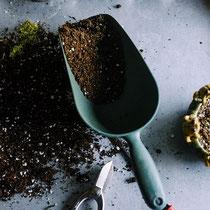 Achten Sie auf qualitativ hochwertige Erde mit Dünger.