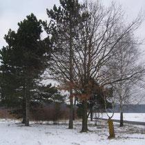 Ein Blickfang ist diese schöne Baumgruppe. Sie steht am Ortsausgang in Richtung Eickendorf