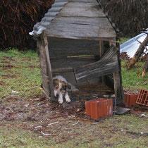 selbst die Hundshüttn folgt dem üblichen Baustil