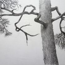 Baum | 2021 | Bleistift auf Papier auf Holz | 20 x 25 cm