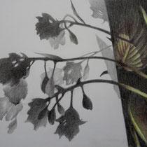 Schatten Funkie 2 | 2020 | Bleistift / Farbstift auf Papier auf Holz | 20 x 25 cm