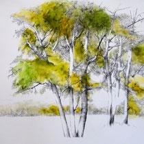 Baumreihe Ebene Ardèche | 2020 | Tusche / Ölfarbe auf Papier | 56 x 76 cm
