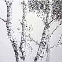 Zwei Birken | 2021 | Bleistift auf Papier auf Holz | 20 x 25 cm