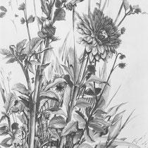 Dahlie | 2021 | Bleistift auf Papier | 70 x 50 cm