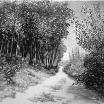 Ardennen III | 2019 | Bleistift auf Karton | 50 x 70 cm