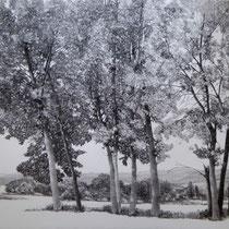 Ardèche |  Baumgruppe | 2019 | Bleistift auf Karton | 70 x 100 cm