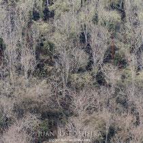 Bosque de Palo Santo (Bursera graveolens).