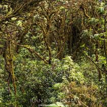Bosque de Escalesia.