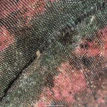 Detalle de la piel de una iguana marina.