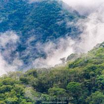 A nuestra salida de Salta el paisaje nos sorprende por sus frondosos bosques.