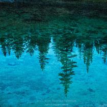Bosque reflejado