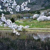 里の春景色